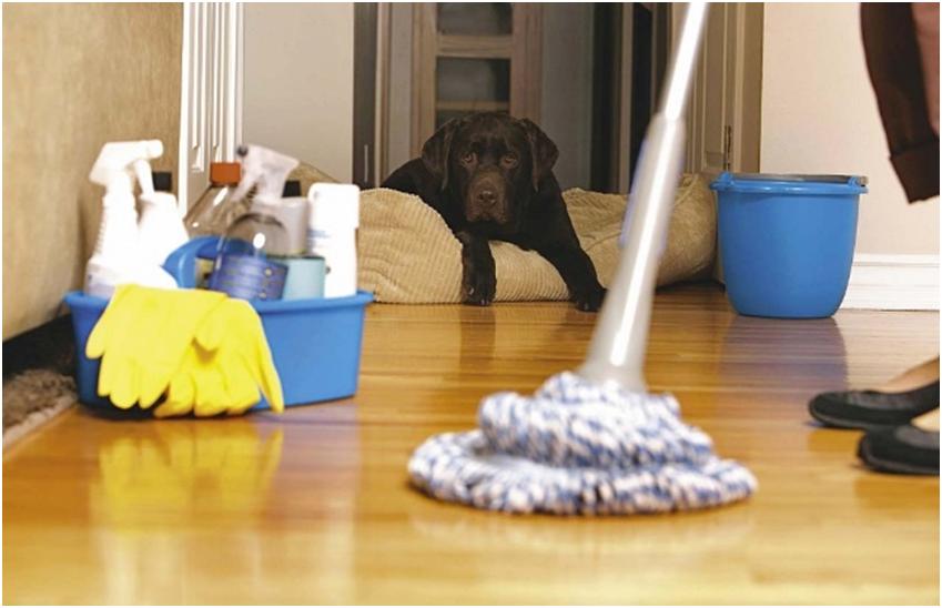 Уборка помещения, где обитает питомец, специальными дезинфицирующими веществами защитит ваших родных и предотвратит заражение