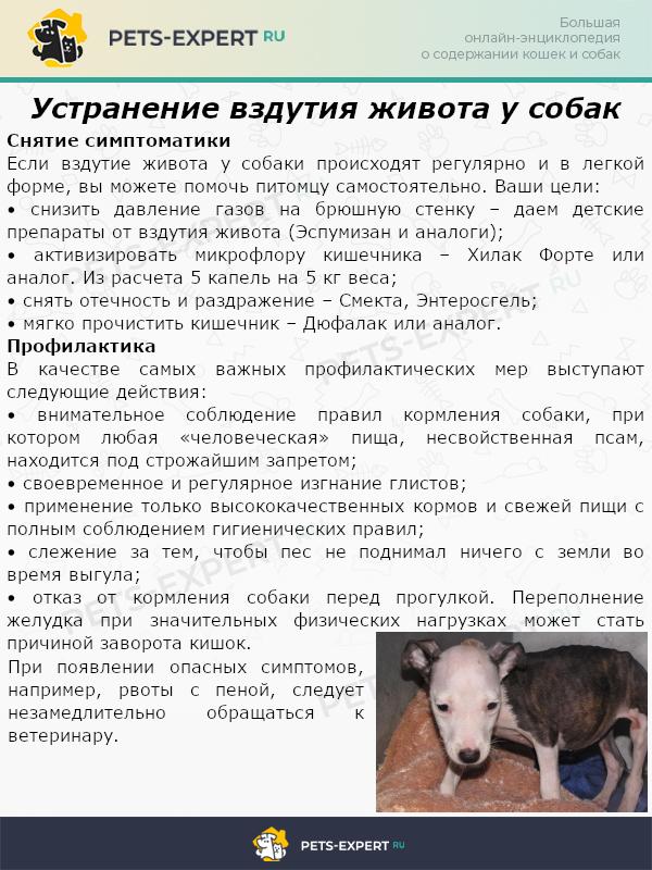 Устранение вздутия живота у собак