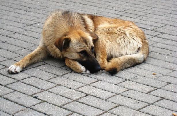 У бездомных собак нет иного выхода, кроме как поисков пищи на улице