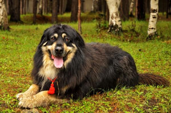 Формирование собаки полностью завершается только к 4 годам