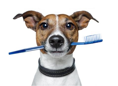 Хочу почистить зубы