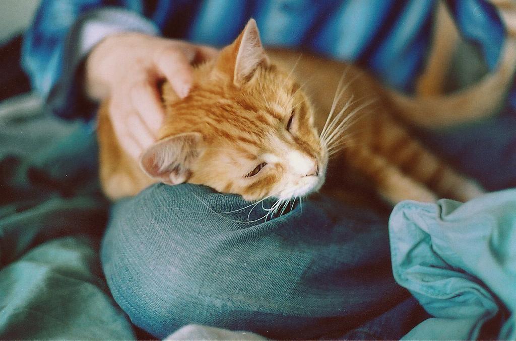 Цефтриаксон имеет положительные отзывы владельцев животных