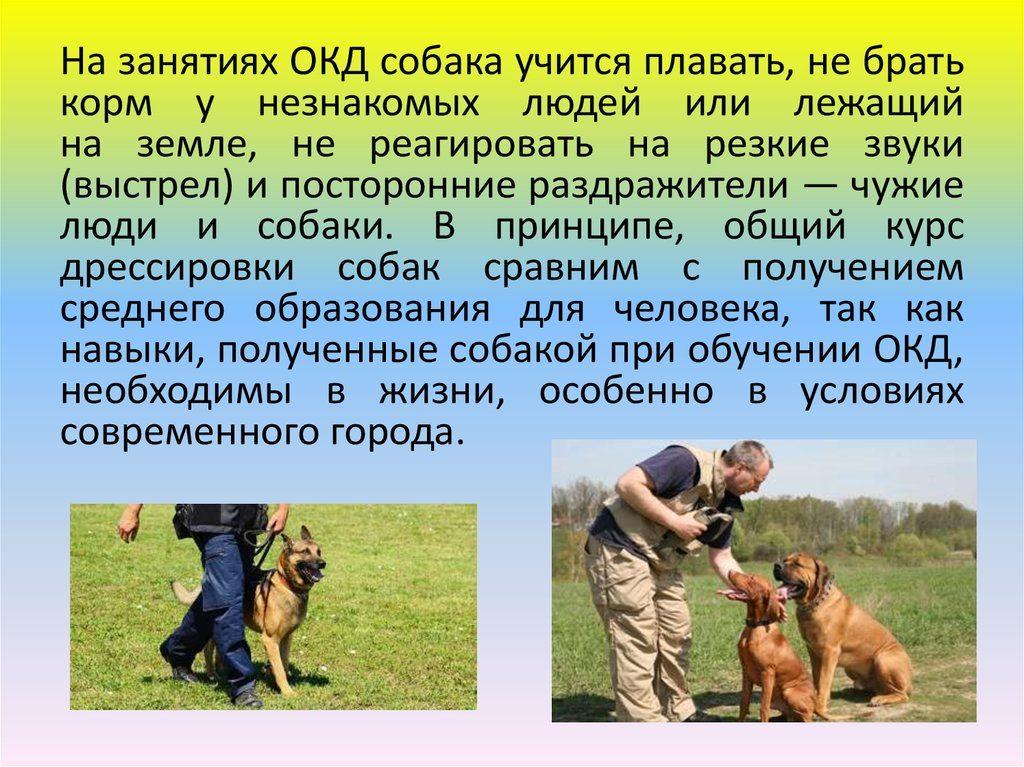 Чему учится собака на курсах ОКД