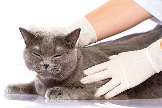 Чем раньше ветеринар поставит однозначный диагноз, тем быстрее вы сможете вылечить своего питомца без вреда для себя и семьи
