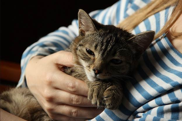 Чем раньше успокоится кошка, тем быстрей ей удастся избавиться от надоедливой икоты