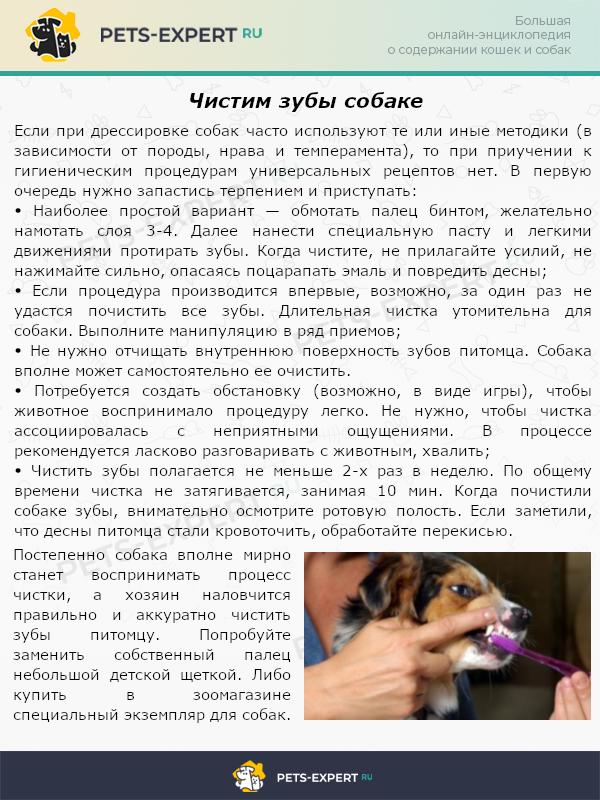 Чистим зубы собаке