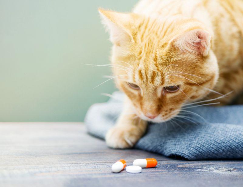 Чтобы избежать нарушений функционирования органов кошке необходимо давать витамины