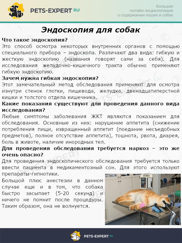 Эндоскопия для собак