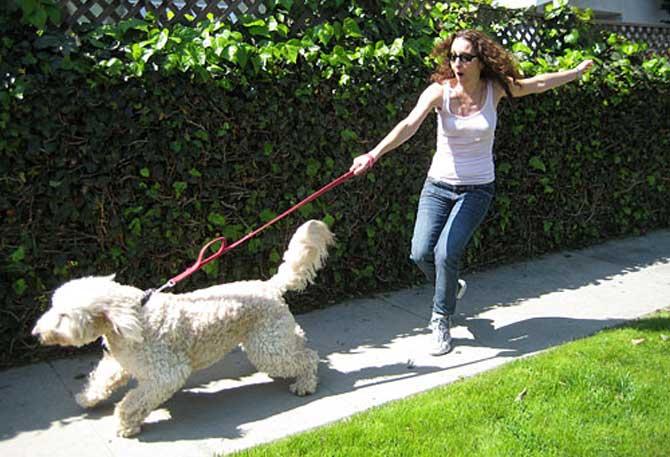 Эта собака явно доминирует над хозяйкой