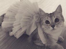 Как сделать одежду для котенка своими руками?