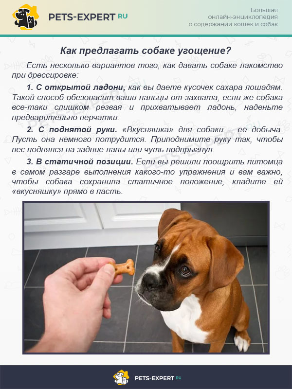 Как предлагать собаке угощение?