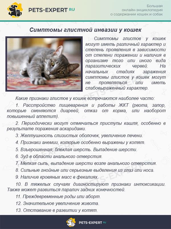 Симптомы глистной инвазии у кошек