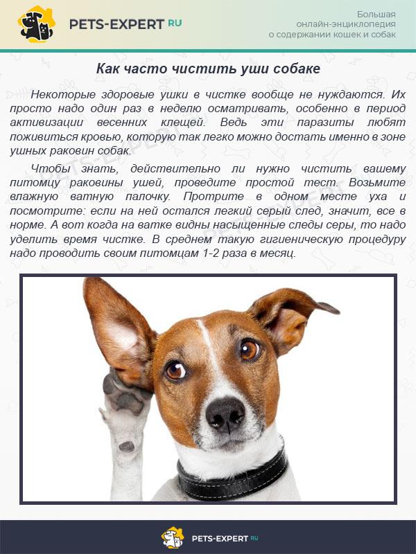 Как часто чистить уши собаке