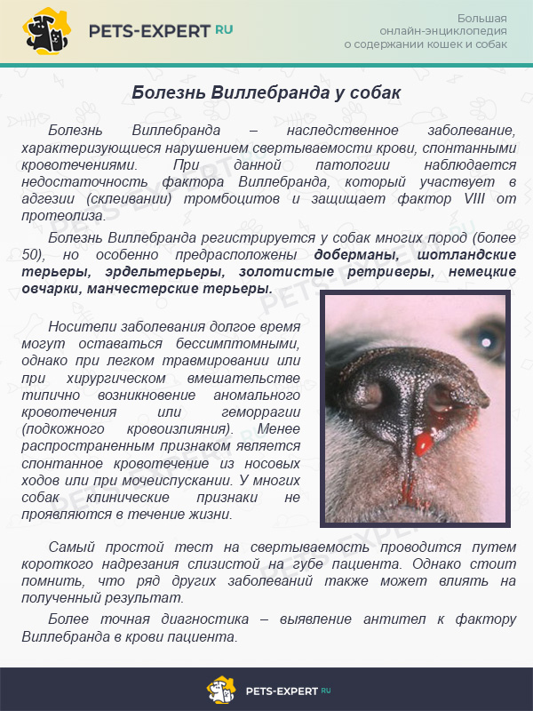 Болезнь Виллебранда у собак
