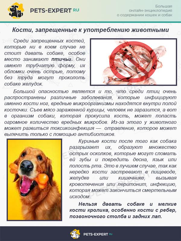 Кости, запрещенные к употреблению животными