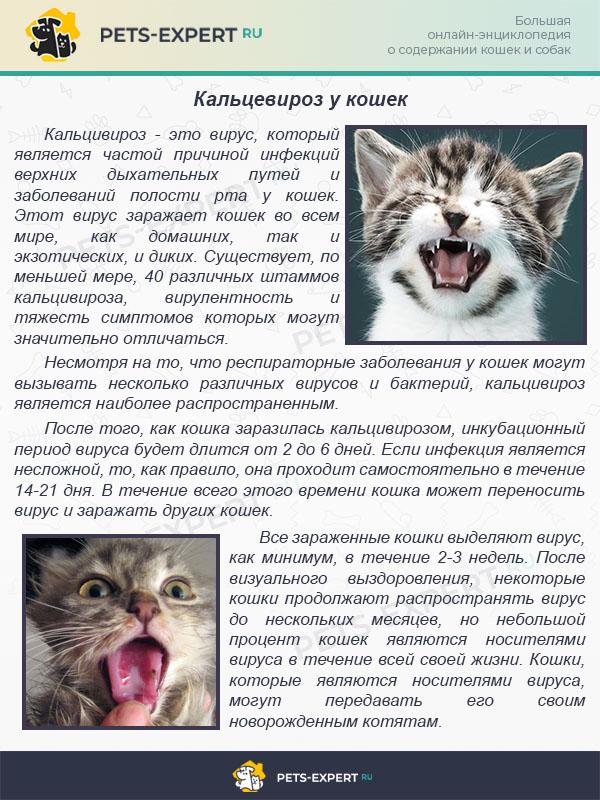 Кальцевироз у кошек