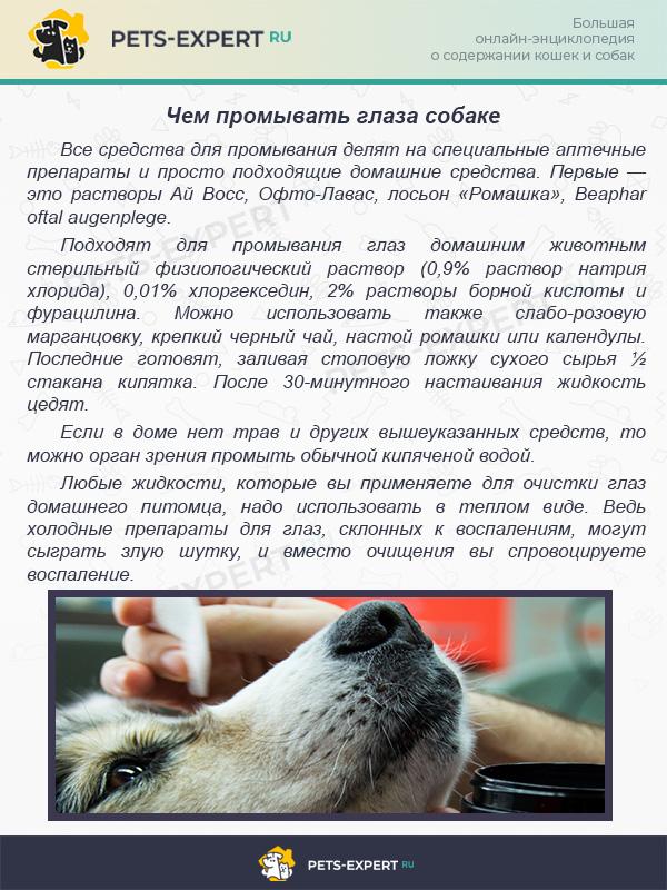 Чем промывать глаза собаке