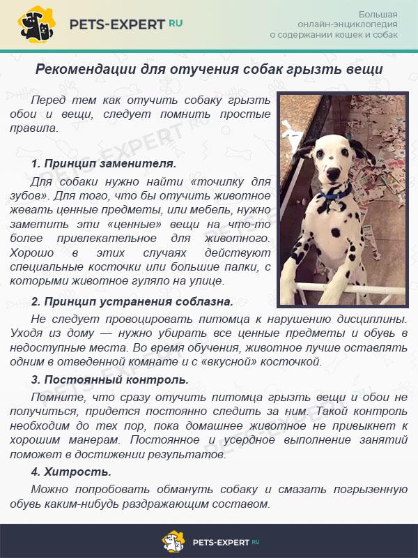 Рекомендации для отучения собак грызть вещи