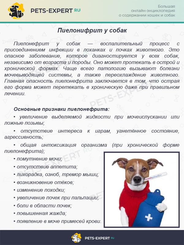 Пиелонифрит у собак