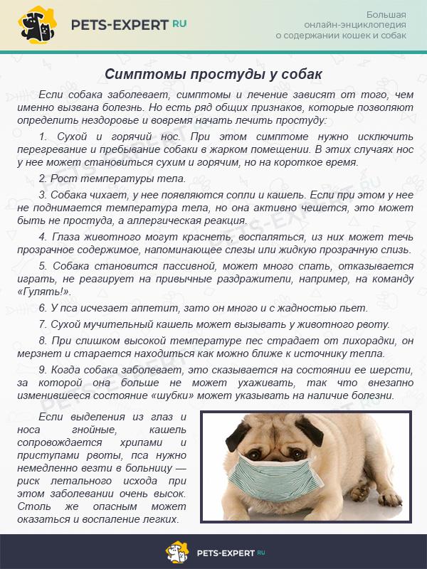 Симптомы простуды у собак