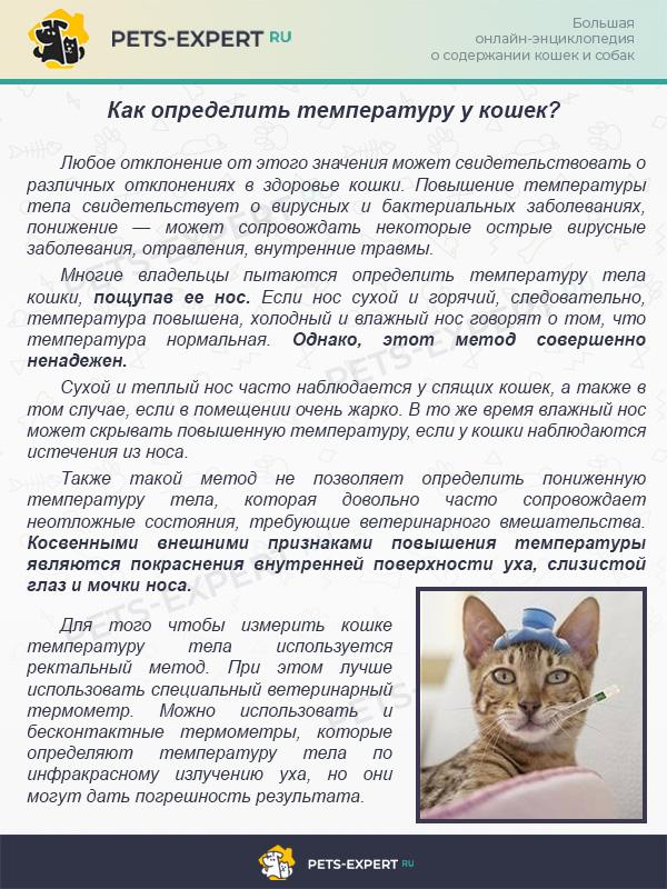 Как определить температуру у кошек?