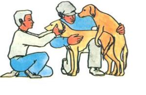 Вязка больших собак