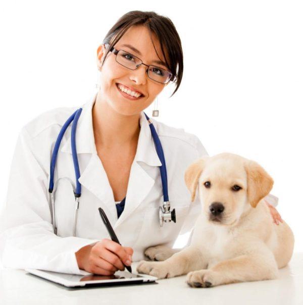 При этом, в каждом случае лучше всего проводить очистку организма собаки от паразитов под контролем ветеринарного доктора