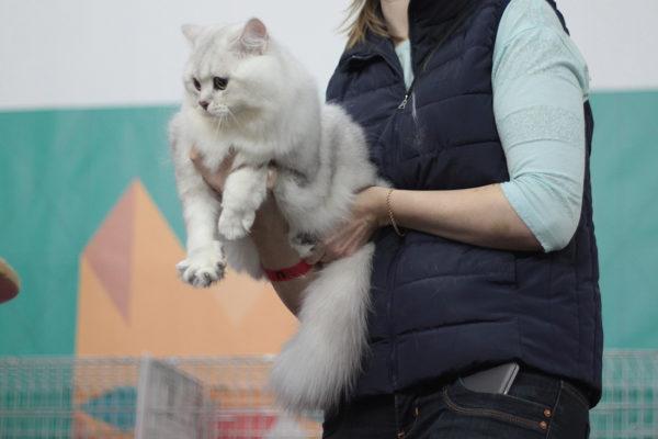Вот как надо держать кота