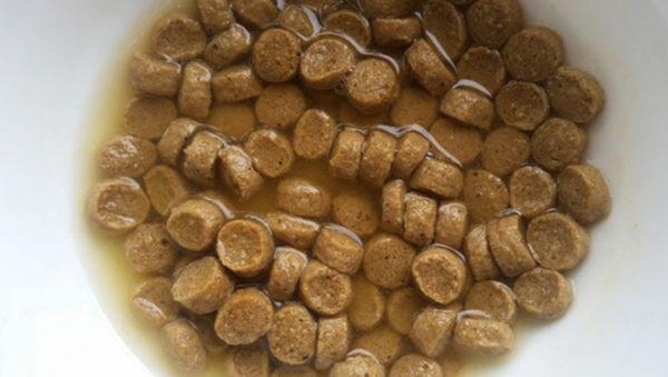 Размоченный корм собака воспринимает лучше