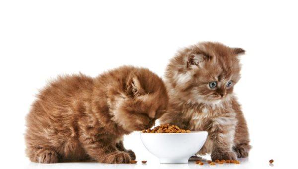 Здоровому коту и котенку - только сухой корм