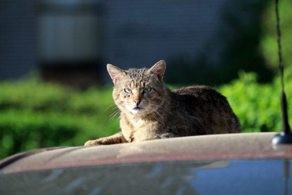 Уличные коты обладают более крепкой иммунной системой по сравнению с домашними