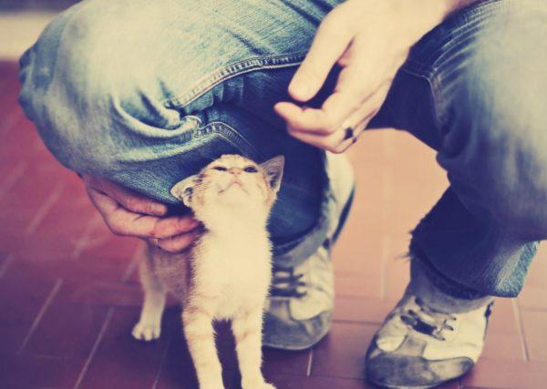 Кошка ластится у ног