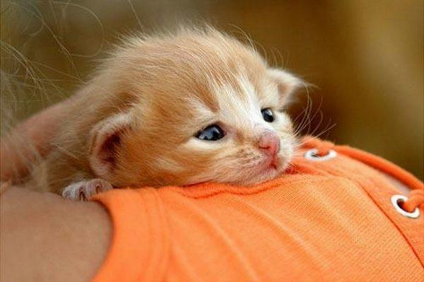 Котят не стоит брать на руки слишком рано