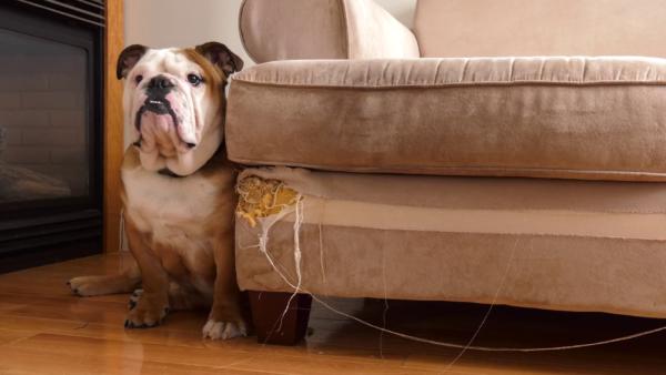 Питомец не уничтожает мебель специально – он следует инстинктам