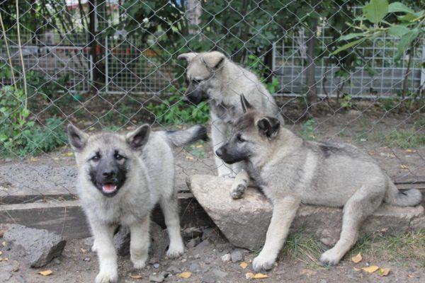 В огороженном пространстве вольера легко контролировать безопасность щенков