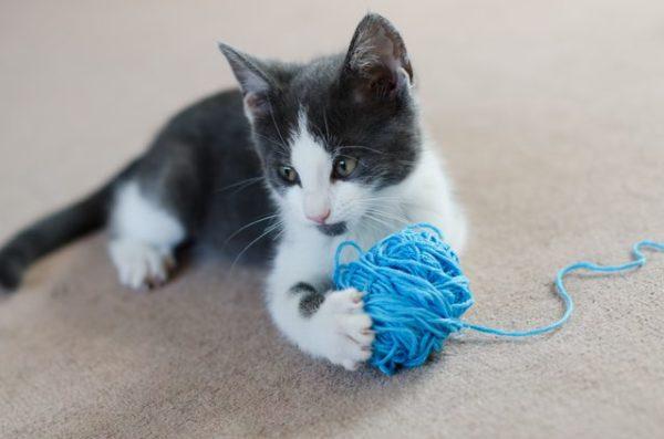 Данная проблема у кошек часто вызвана поеданием ниток во время игры