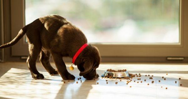 Спешка во время приема пищи может привести к неприятным последствиям