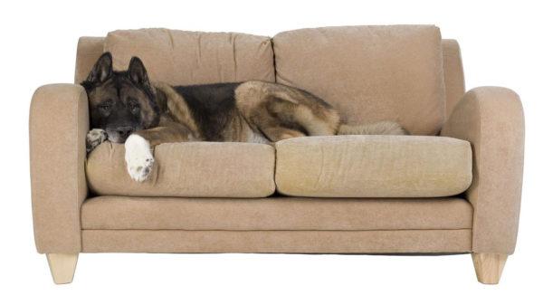 Малоподвижный образ жизни собаки может вызвать снижение аппетита