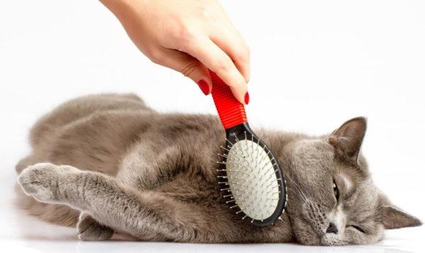 Как правило, кошки очень любят, когда их расчесывают