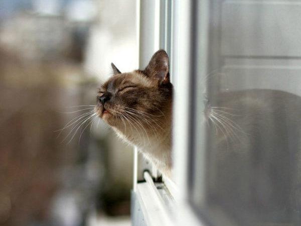 Нос кошки во много раз чувствительнее, чем у человека