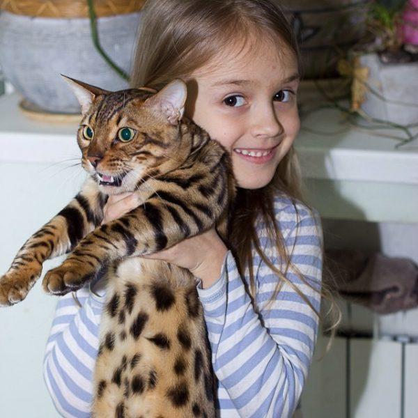 Объясните ребенку, как понять, что кот недоволен