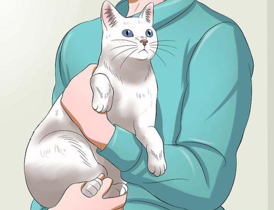 Как держать кота
