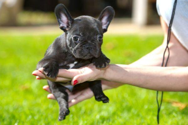 Маленькая собака должна спокойно себя чувствовать на руках у хозяина