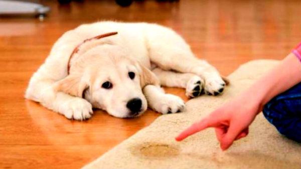 Причины возникновения цистита у животных
