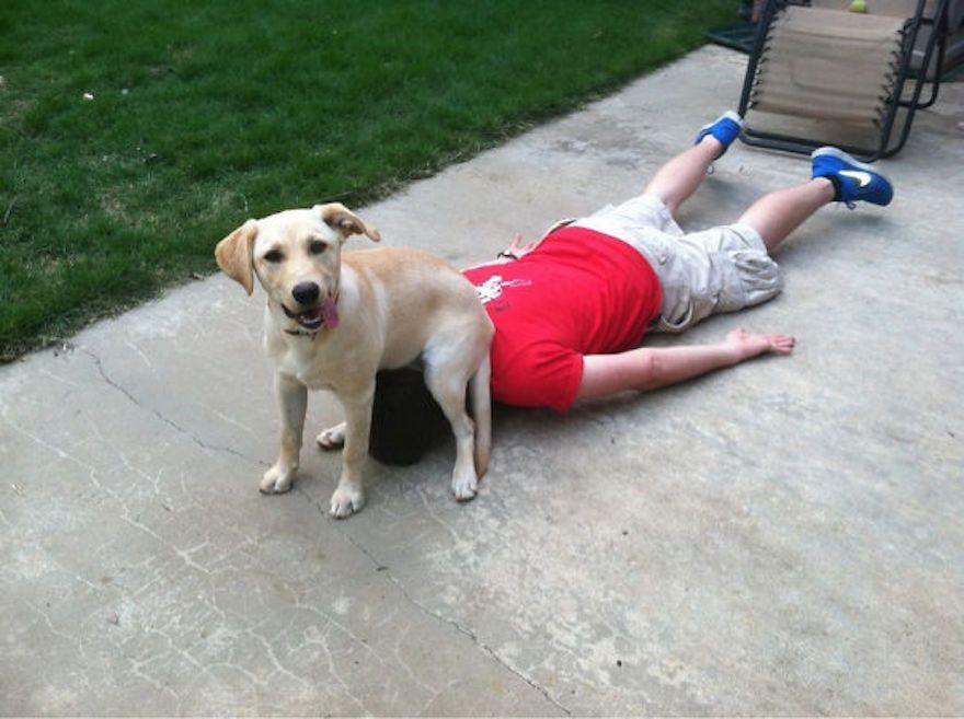Игнорирование собаки — один из методов терапии