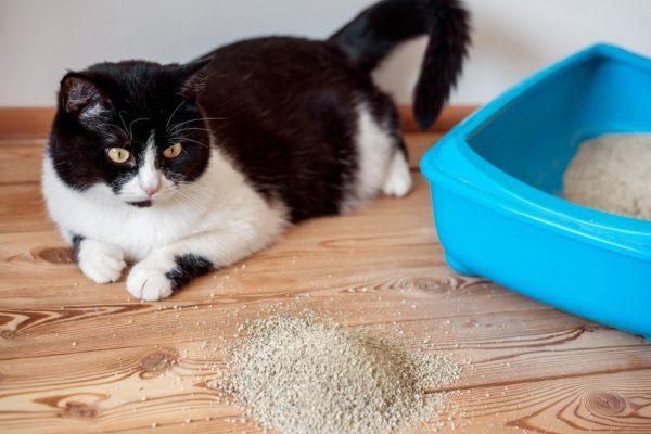 Кот какает с кровью: как действовать?
