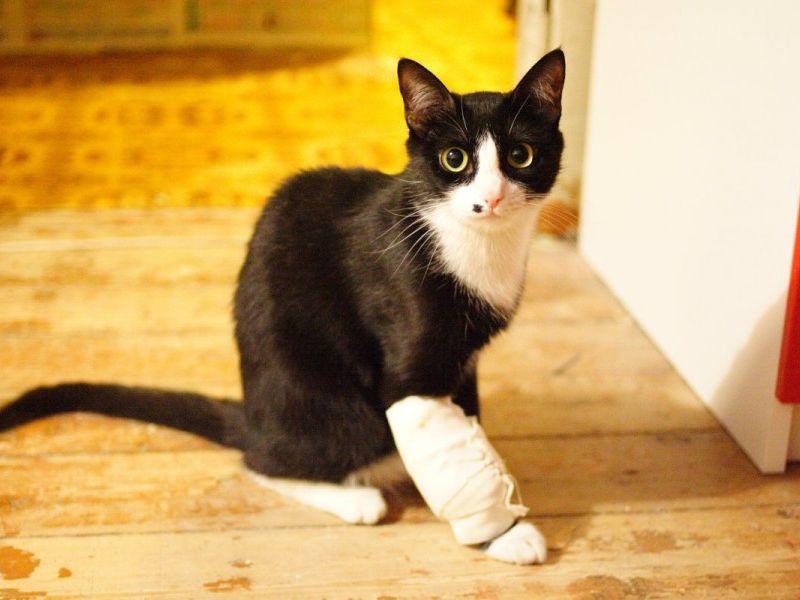 Чем обработать рану коту в домашних условиях?