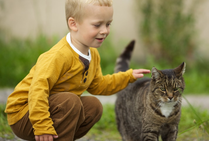 Дети очень любят кошек