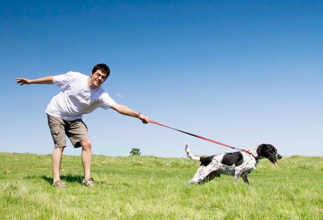 Как показать собаке, что ты главный?