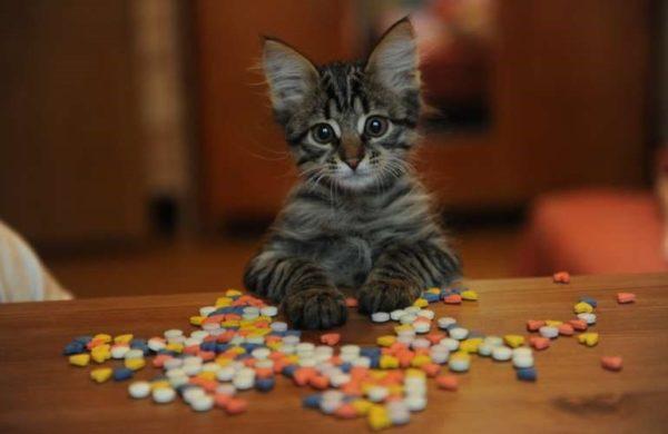 Как дать кошке таблетку?